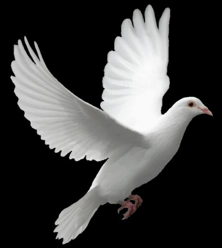 King Avid Khan: Birds png.