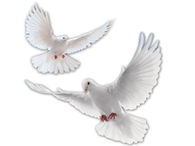 HD Bird PNG images Free Download By morepng.