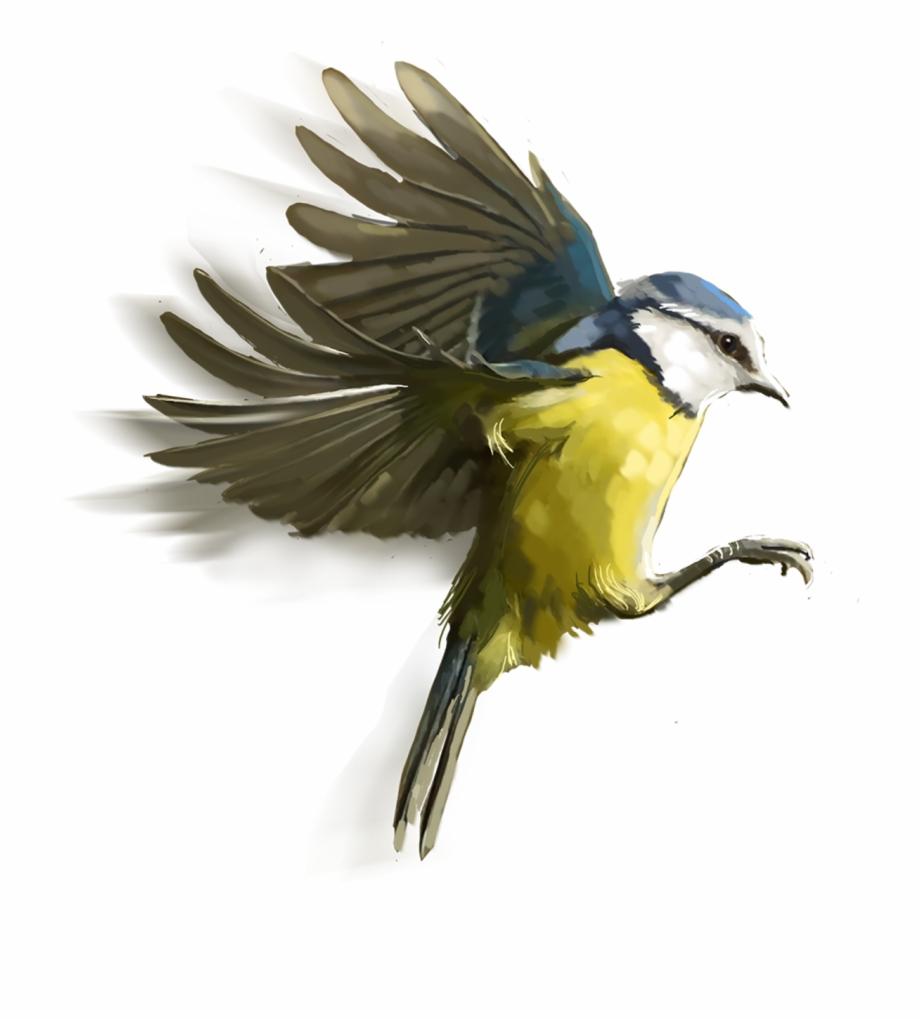 Cb Edit Bird Png, Transparent Png Download For Free #396432.