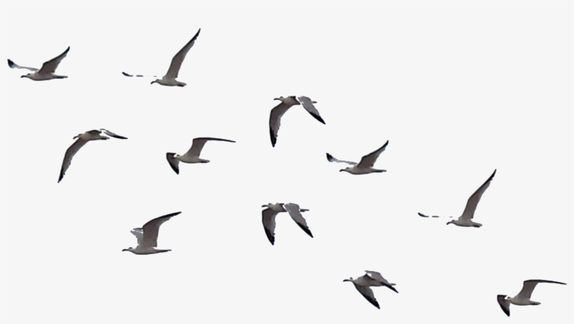 Bird Png File.