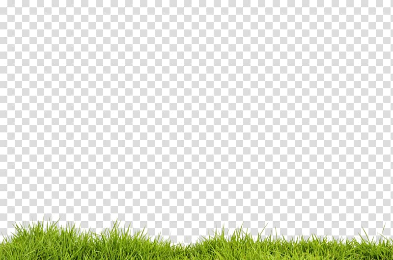 Green grass, Desktop Portable Network Graphics PicsArt.