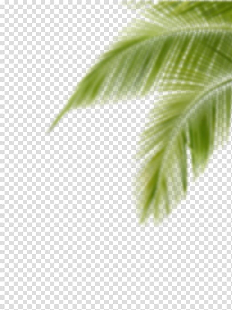 Portable Network Graphics Editing Desktop PicsArt Studio, cb.