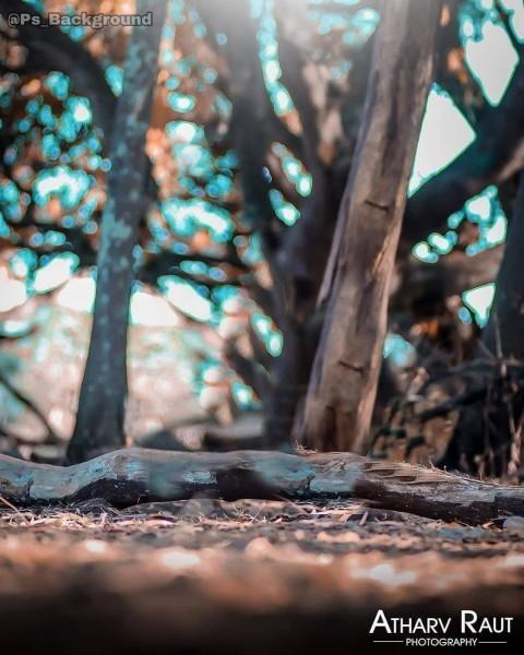 tree cb editing background.