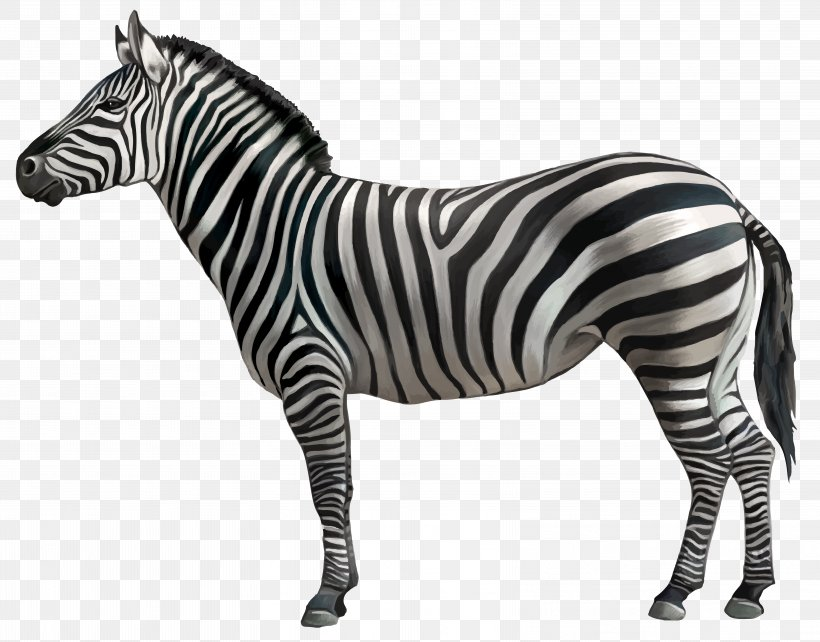 Zebra Clip Art, PNG, 6489x5085px, Zebra, Black And White.