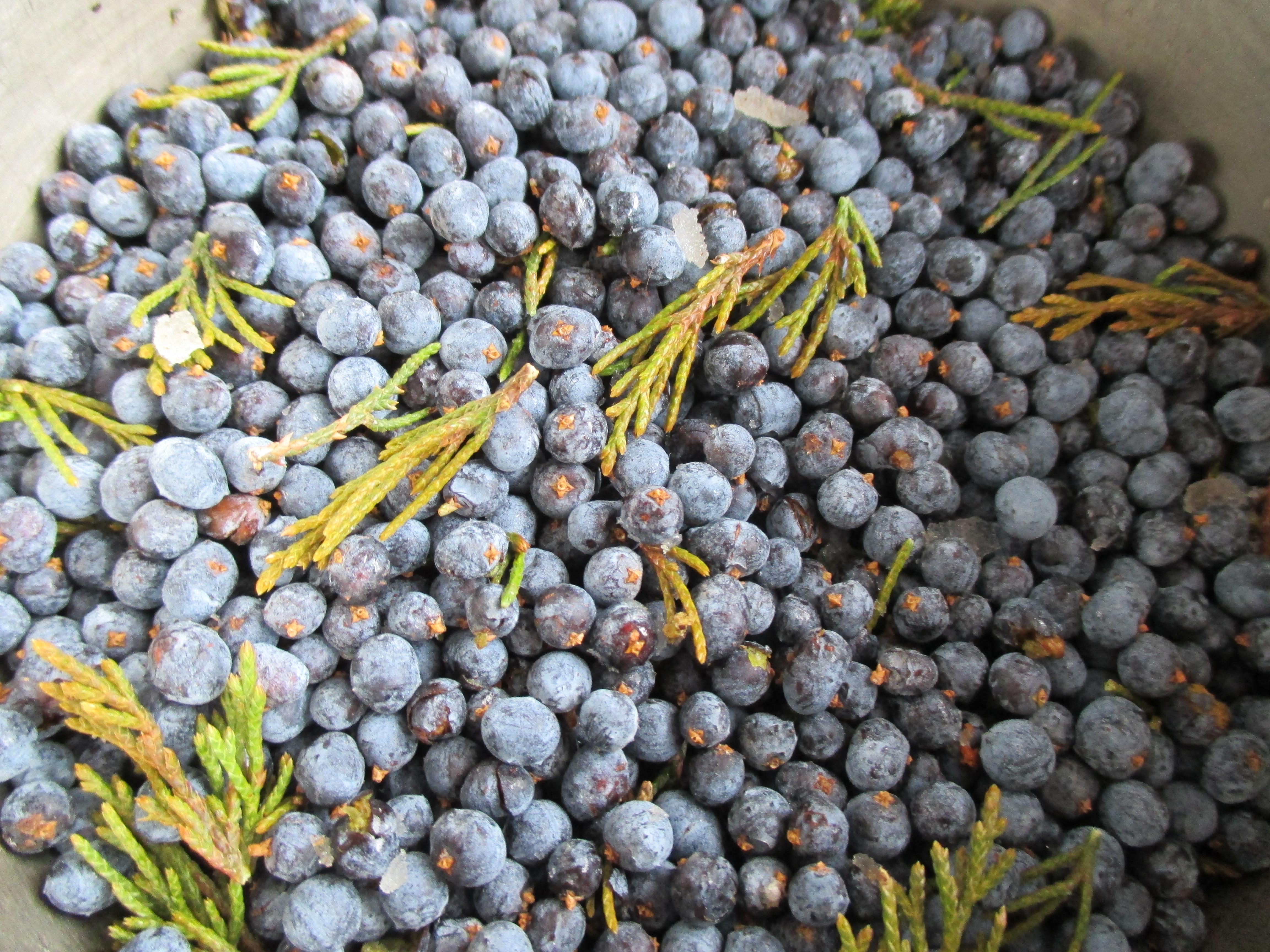 Cedar Berries Herbalism.