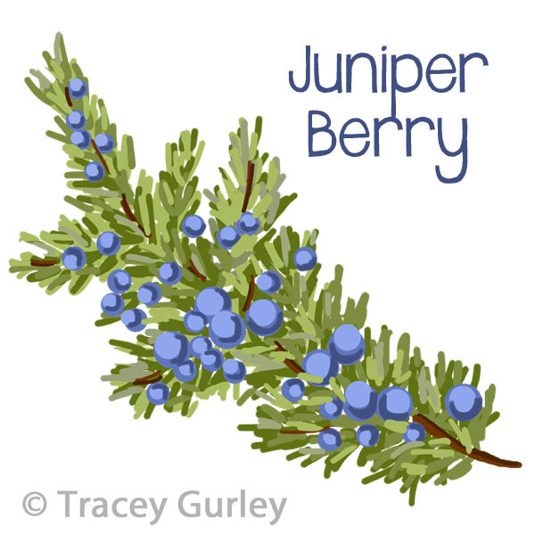 Juniper branches.