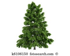 Cedar tree Illustrations and Clipart. 186 cedar tree royalty free.