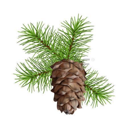2,054 Cedar Tree Stock Vector Illustration And Royalty Free Cedar.