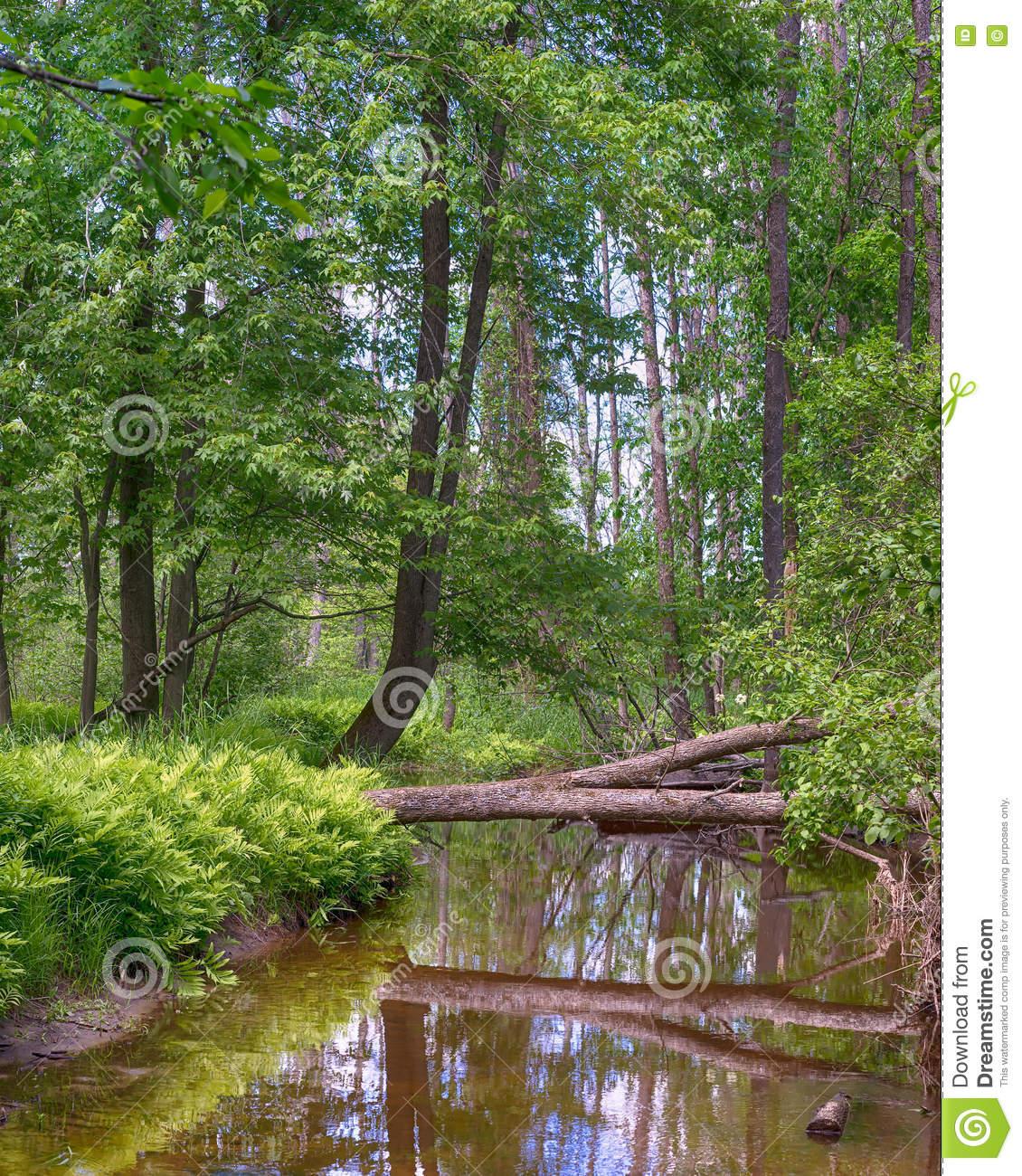 Reflections, Little Cedar River, Gladwin, MI Stock Photo.