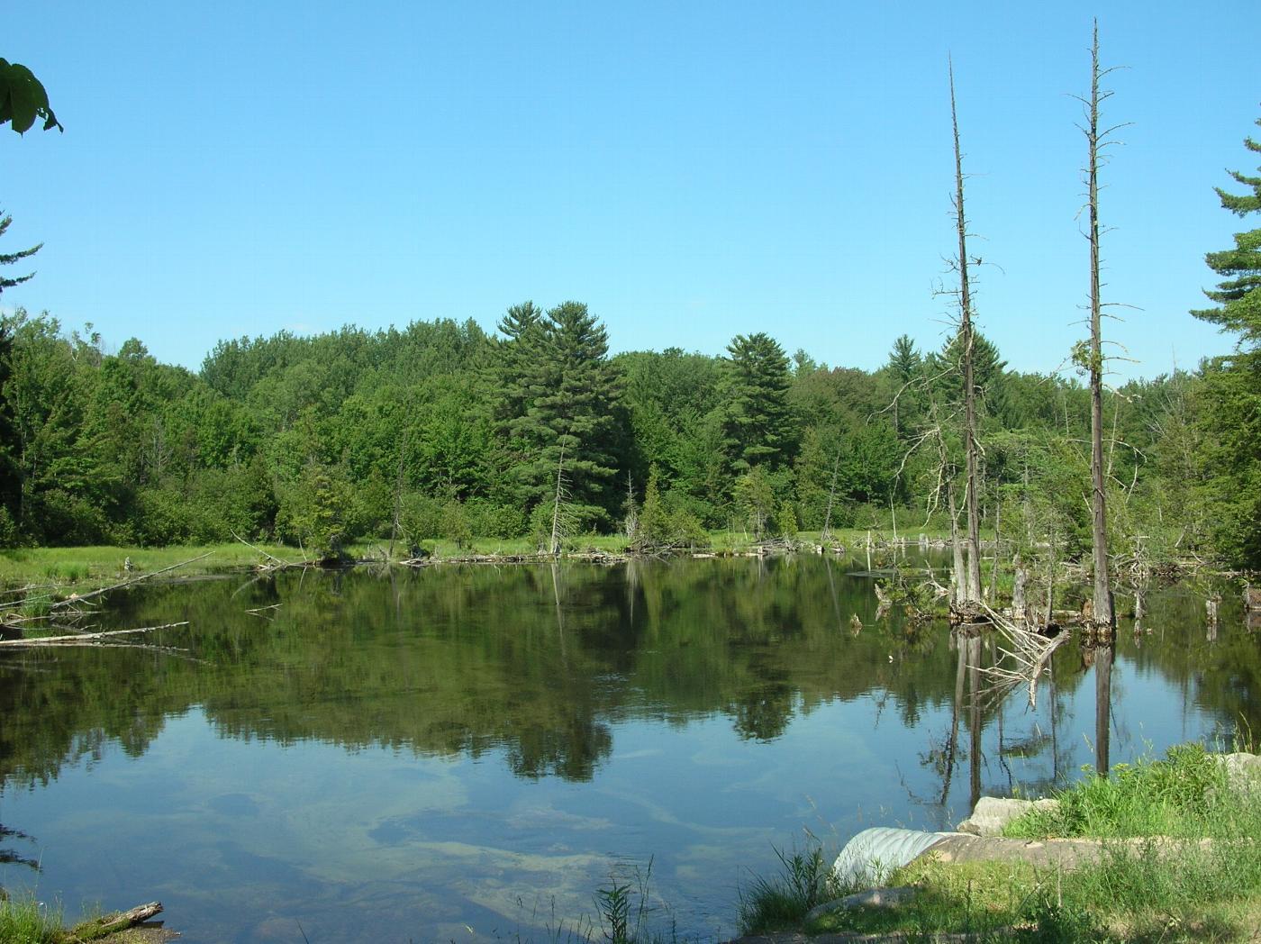 Michigan Nature Association.