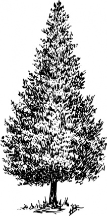 Cedar Tree Clip Art, Vector Cedar Tree.