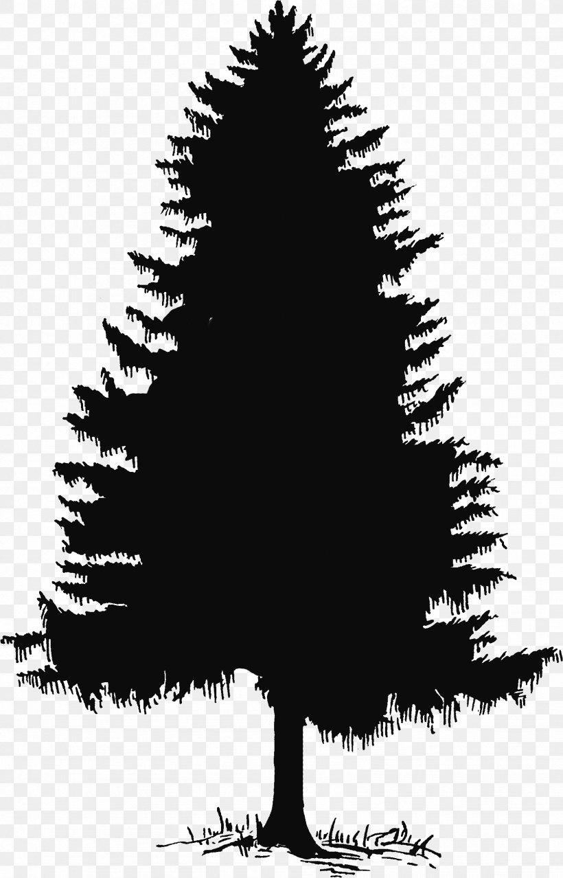 Evergreen Tree Pine Silhouette Clip Art, PNG, 1668x2601px.