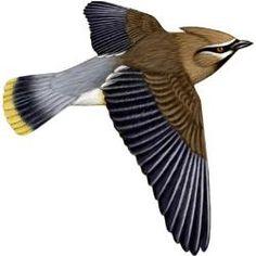 How to get sharp photos of birds in flight..
