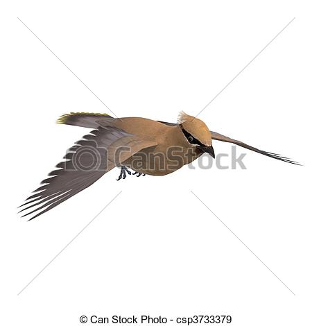 Stock Illustration of Cedar Waxwing. 3D rendering and shadow over.