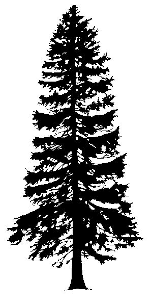Cedars Clipart Clipground