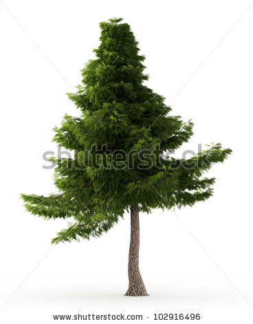 Cedar Tree Stock Photos, Royalty.
