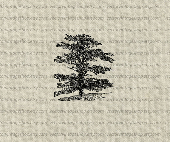 Cedar Vector Clipart Instant Download by vectorvintageshop on Etsy.
