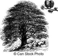 Cedrus Vector Clipart EPS Images. 7 Cedrus clip art vector.