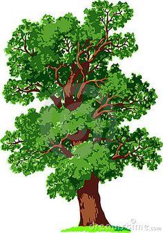 Illustration Of Evergreen Cedrus Deodara (deodar Cedar, Himalayan.