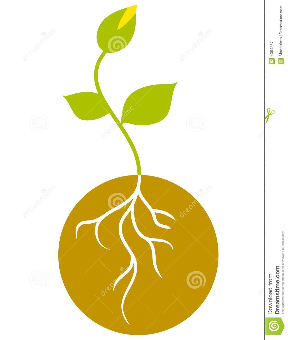 Green Seedling With Roots Royalty Free Stock Photography.