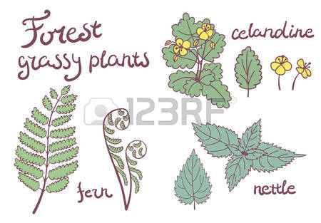107 Celandine Cliparts, Stock Vector And Royalty Free Celandine.