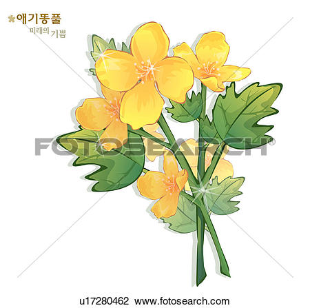 Clip Art of flowers, nature, plants, celandine, plant, bloom.