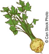 Celeriac Illustrations and Clipart. 34 Celeriac royalty free.