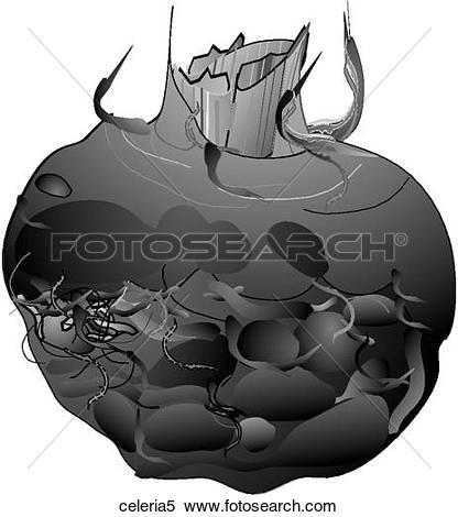 Stock Illustration of Celeriac.