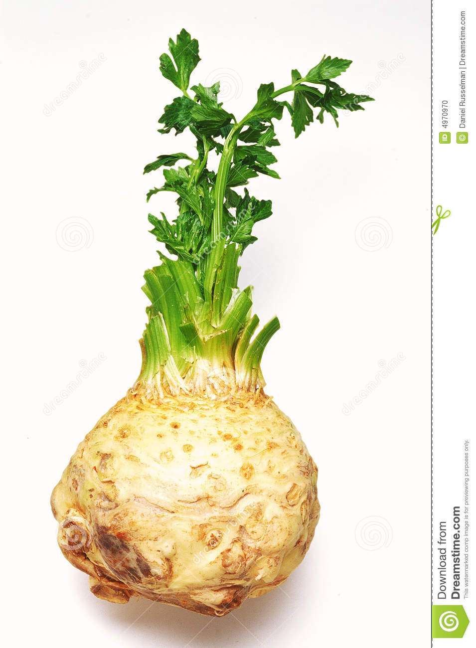 Celeriac clipart.