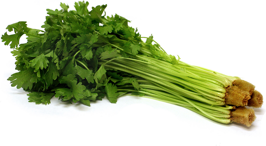 Baby Celery Information, Recipes and Facts.