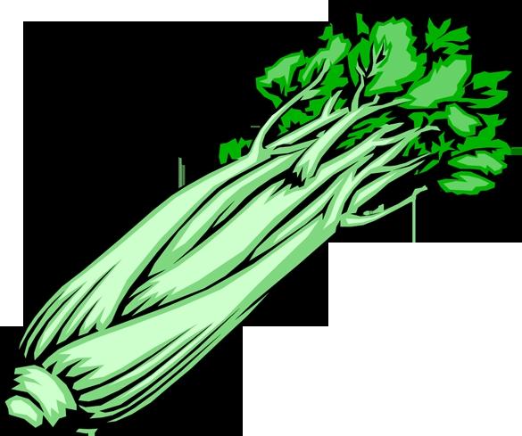 clip art celery celery clipart.