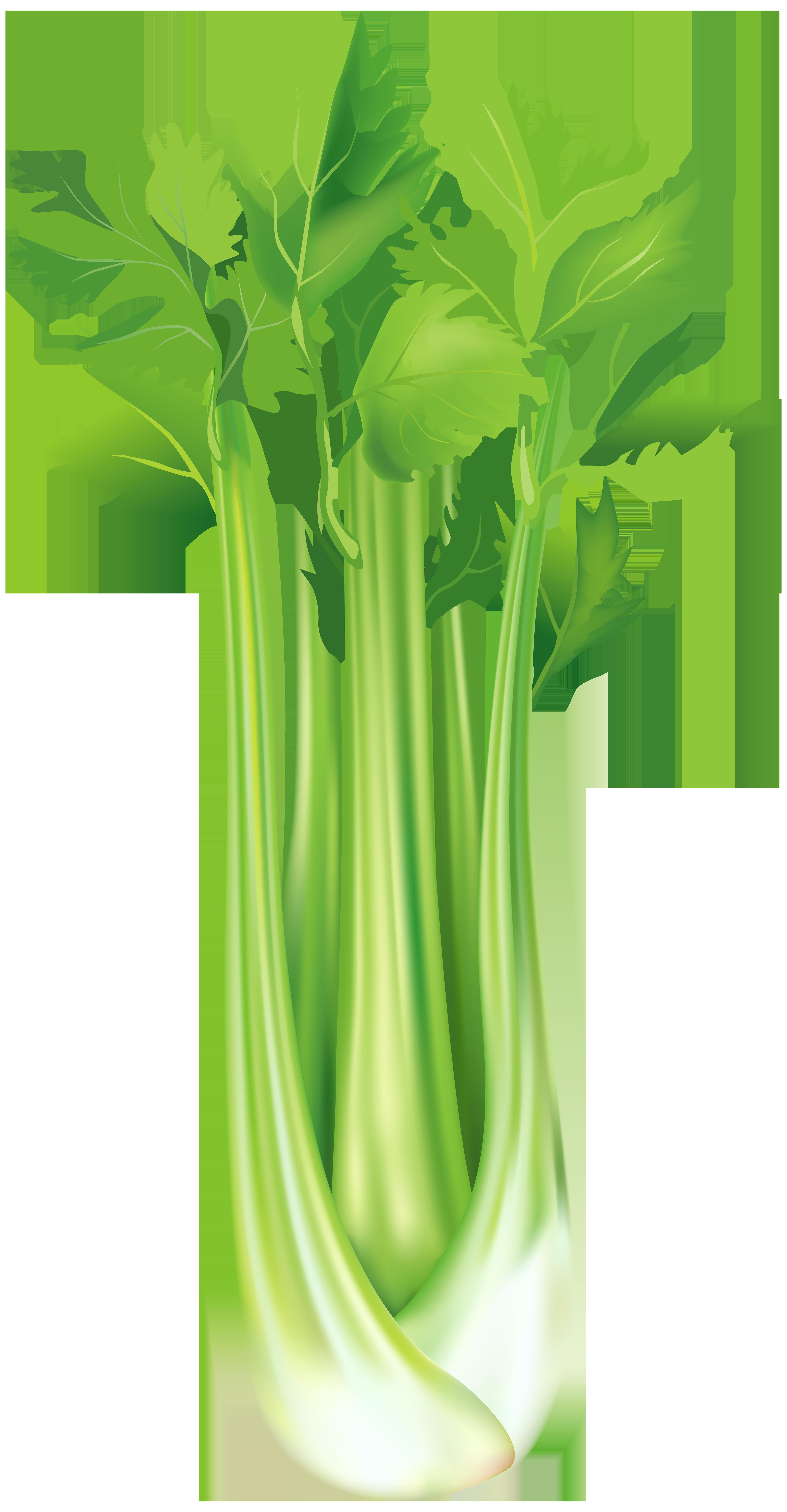 Celery Free PNG Clip Art Image.