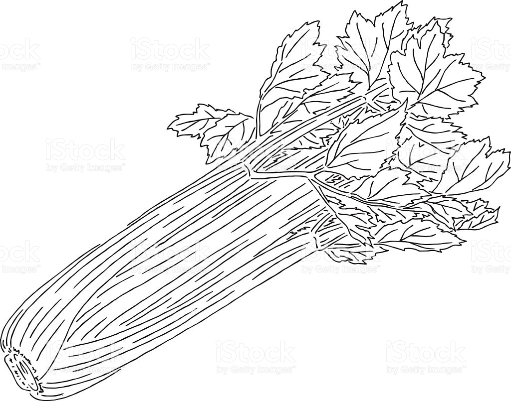 Celery clipart black and white 6 » Clipart Station.