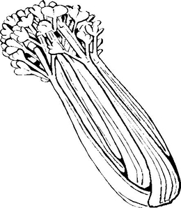 Download celery black and white clipart Celery Clip art.