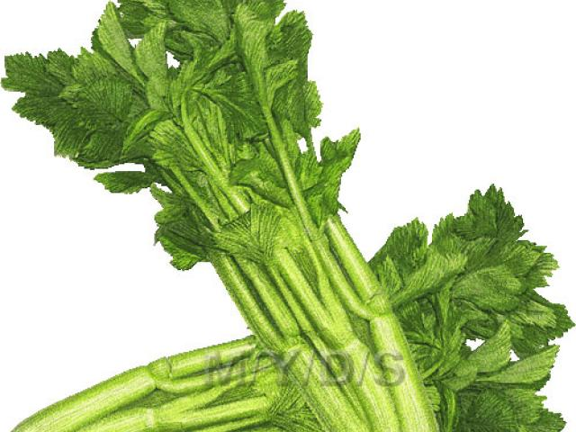 Celery clipart face, Celery face Transparent FREE for download on.