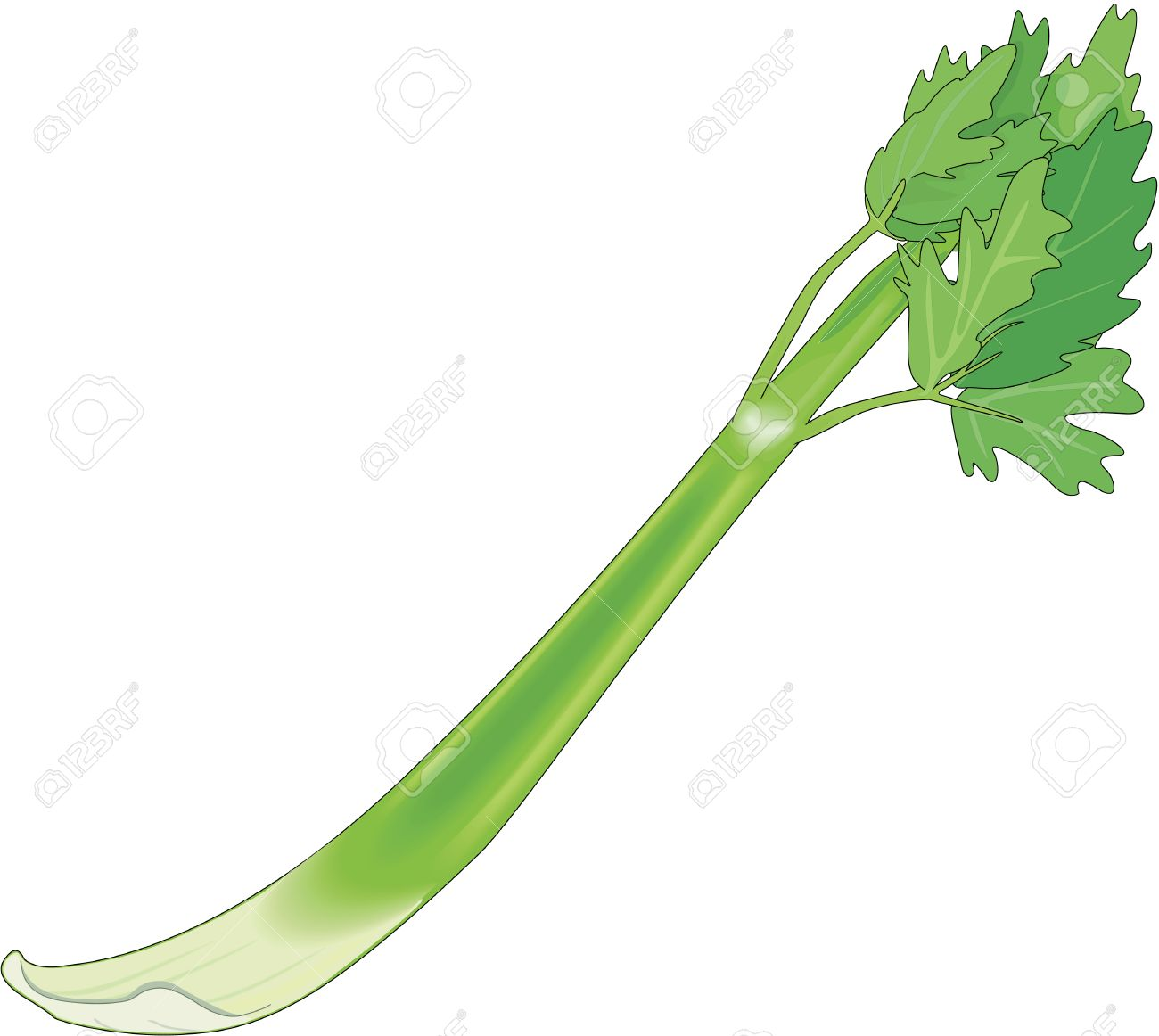 302 Celery Stalk Cliparts, Stock Vector And Royalty Free Celery.