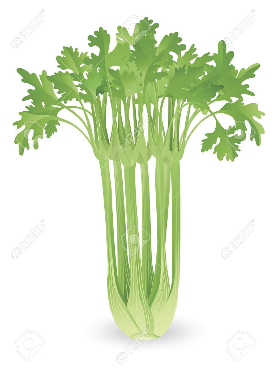 2,186 Celery Stock Illustrations, Cliparts And Royalty Free Celery.