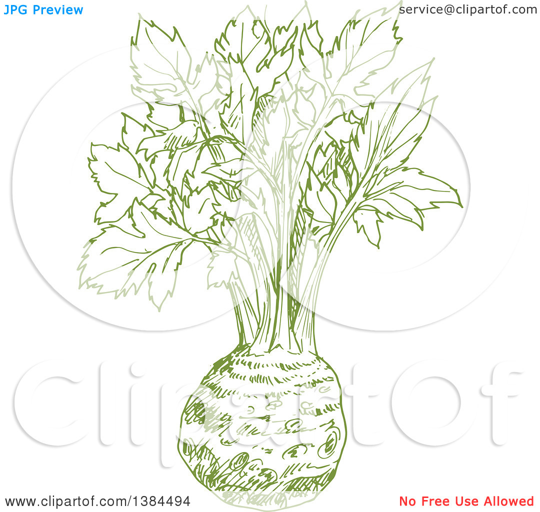 Clipart of a Sketched Celery Root.