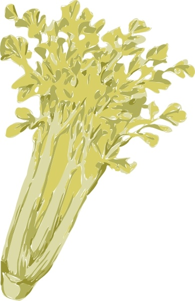 Celery clip art Free vector in Open office drawing svg ( .svg.