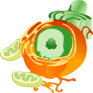 Cell Clipart.