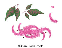 Celosia Illustrations and Clipart. 10 Celosia royalty free.