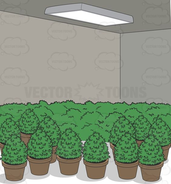Grow room, Potted plants and Vector clipart on Pinterest.