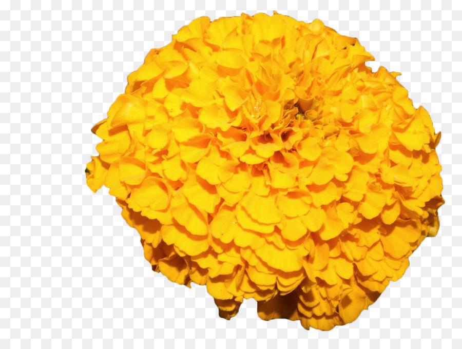 Flower Pot png download.
