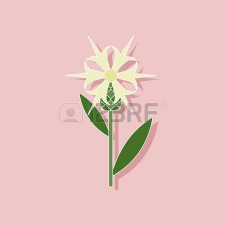 80 Centaurea Stock Illustrations, Cliparts And Royalty Free.
