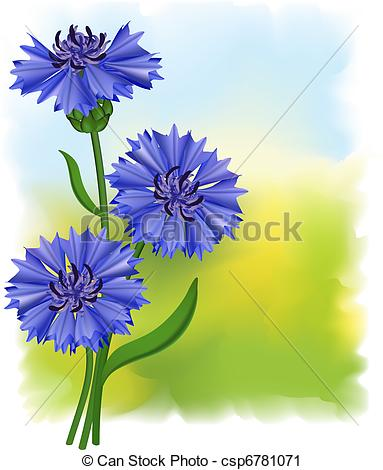 Vector Clip Art of Flowers blue cornflower (Centaurea cyanus.