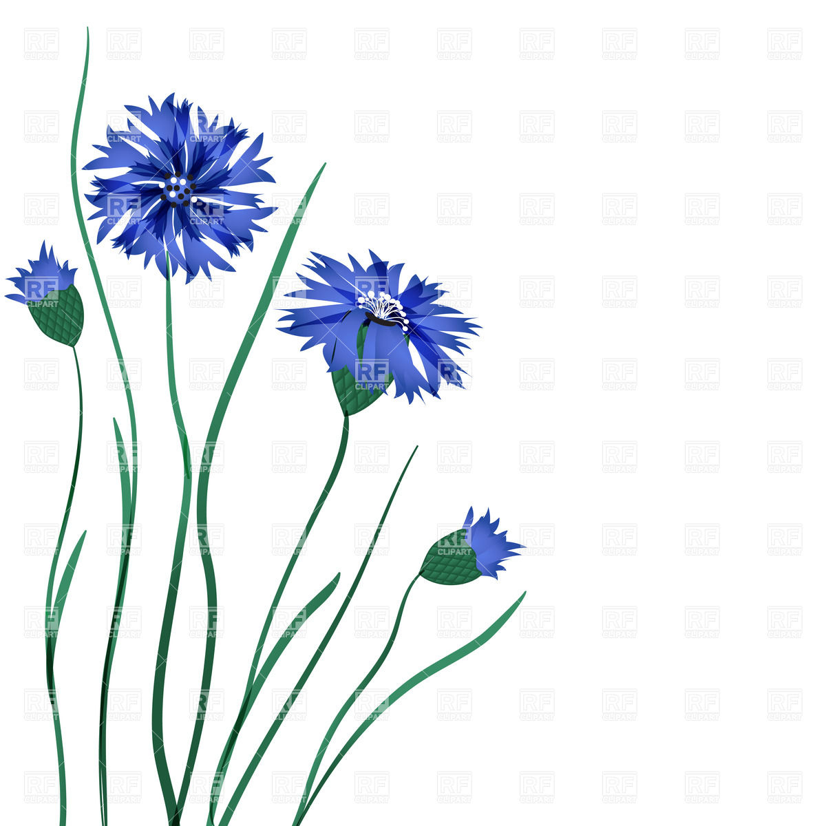 Beautiful blue cornflower Vector Image #22052.