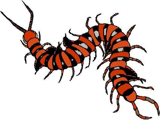 Centipede Clipart.