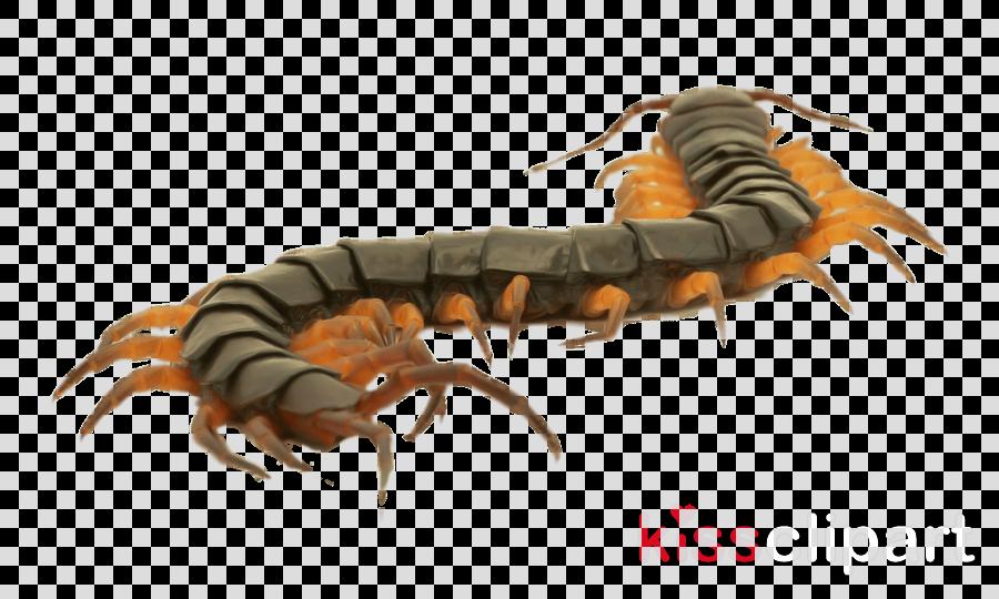 insect centipede millipedes caterpillar larva clipart.
