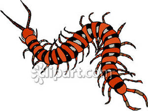 An_Orange_Centipede_Royalty_Free_Clipart_Picture_081220.