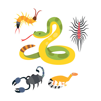 Silhouette Of The Centipedes Clip Art, Vector Images.